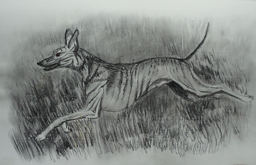 Sighthound Paintings & Drawings