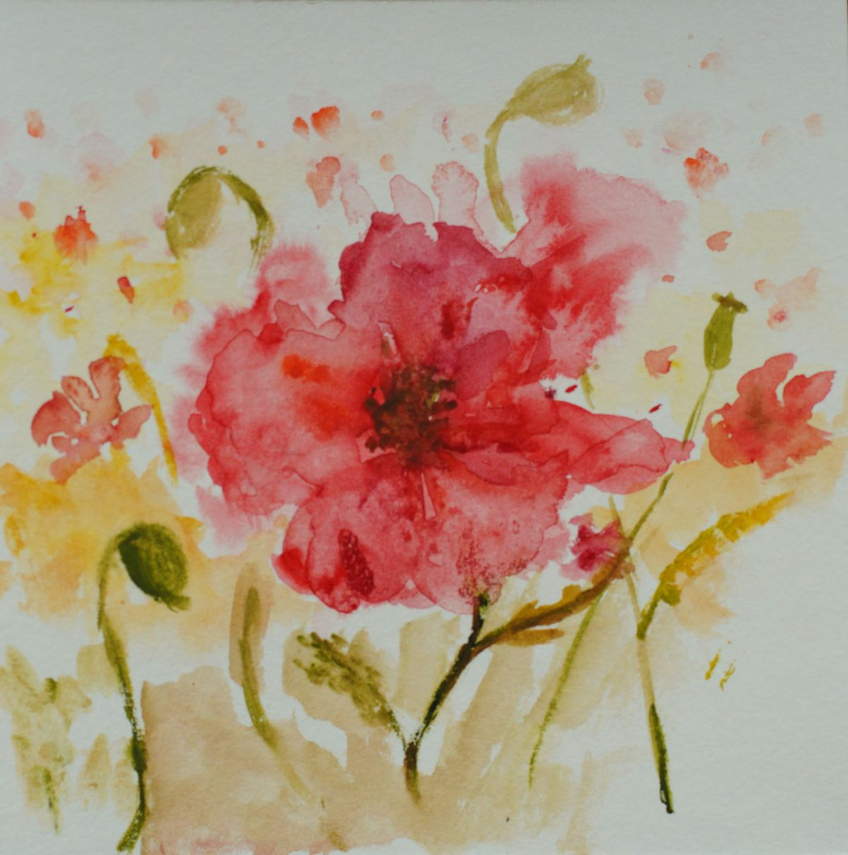 A quick watercolour poppy