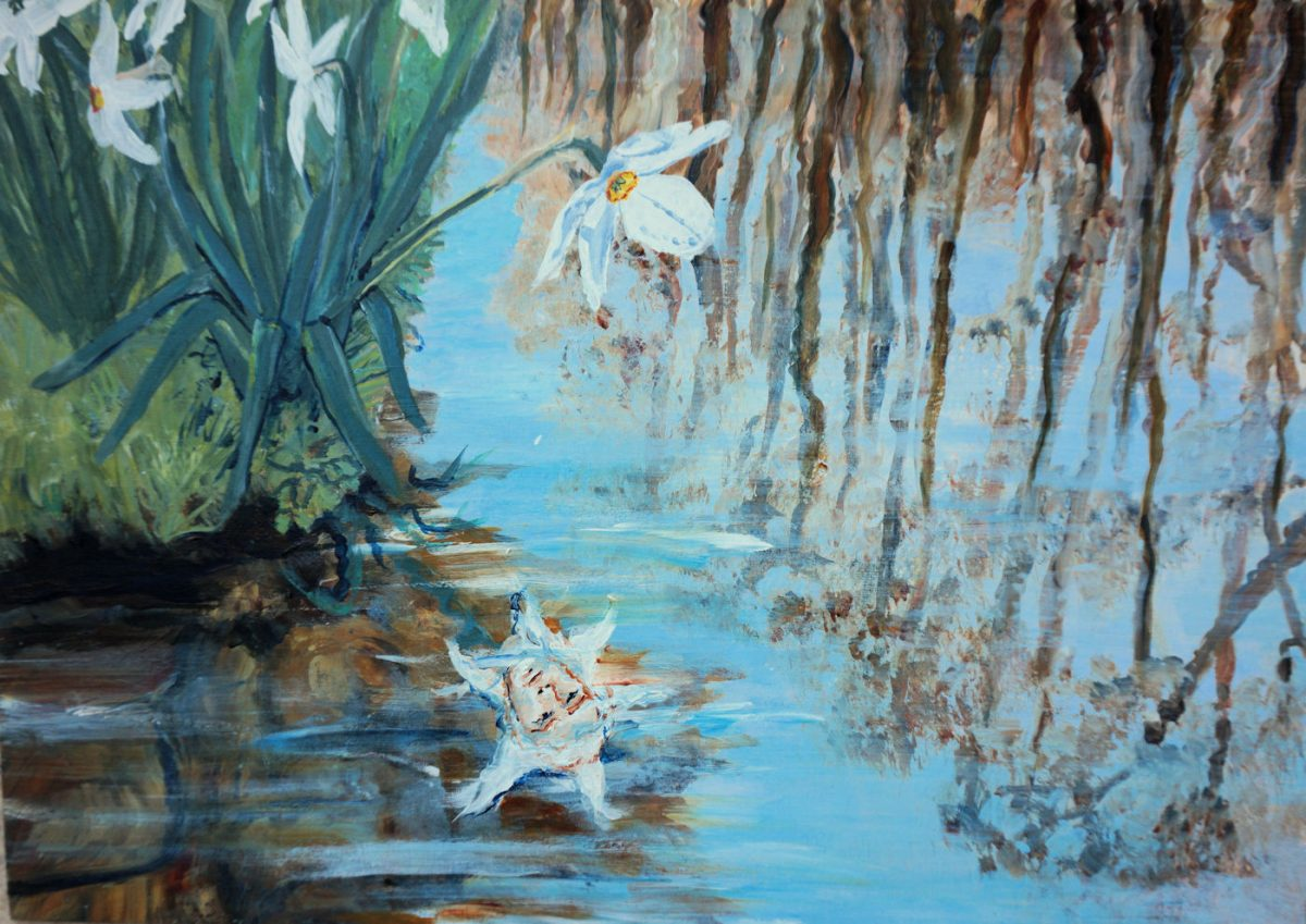 Narcissus by the Lynher